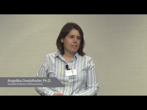 Inner Ear Development   Angelika Doetzlhofer, Ph.D - YouTube