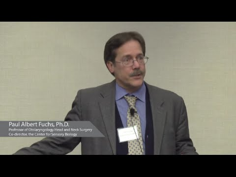 Hearing and Signaling   Paul Fuchs, Ph.D - YouTube